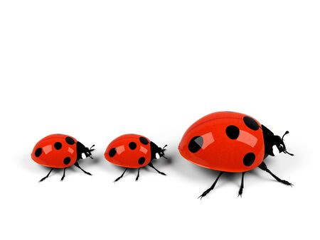ladybug family isolated on white.