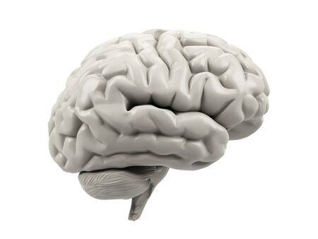 matter: Human brain on a white background. Stock Photo