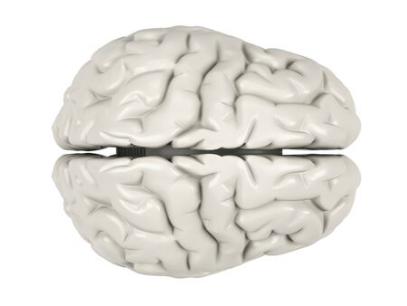 Human brain on a white background. Stock Photo