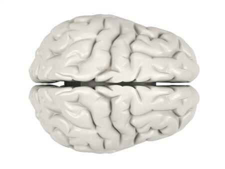 aneurysm: Human brain on a white background. Stock Photo