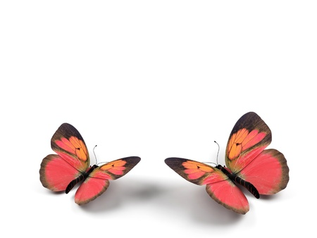 butterfly garden: Butterfly - 3d render illustration on white background