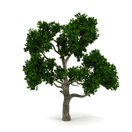 lonely tree: Tree isolated on a white background. Stock Photo