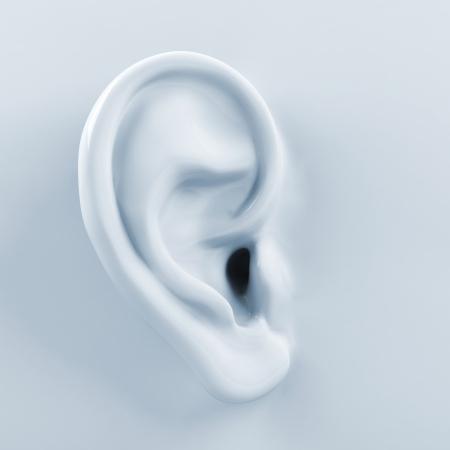 partes del cuerpo humano: 3d oído