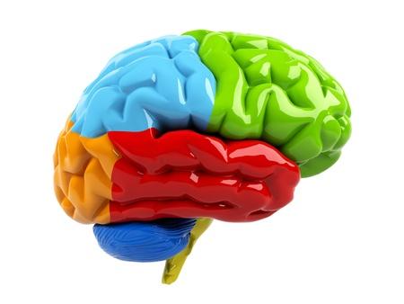 brain clipart: 3d brain
