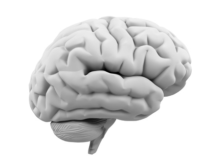 3d brain  Stock Photo - 16816482
