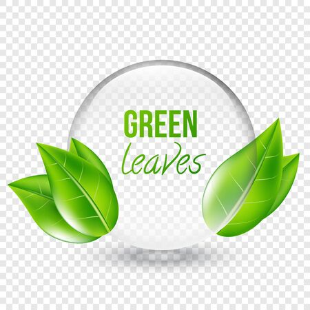 shere: Vector illustration of transparent shere with green leaves for design, business cards. Transparent background.