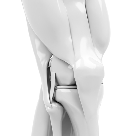 Anatomy of the knee. 3d rendered illustration Stock Photo