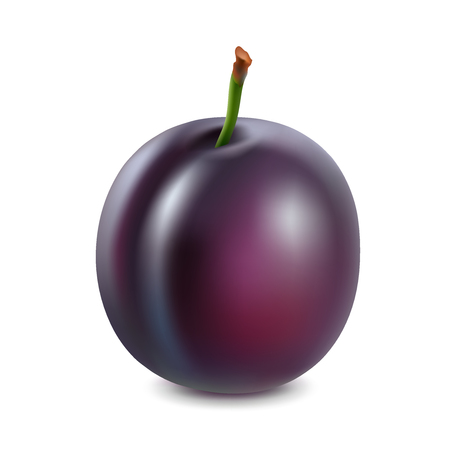 Plum on a white background. 3d vector realistic.
