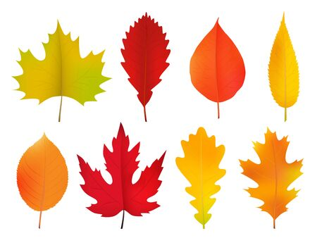 Autumn leaves set, isolated on white background. Realistic vector image