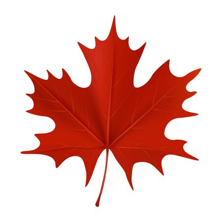 Realistic red maple leaf isolated on white background. Vector illustration Stock Photo