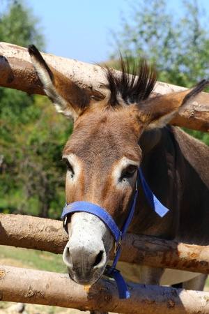 portrait of a funny donkey at a farm Stock Photo - 15220014