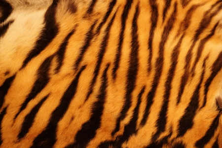 beautiful tiger fur - colorful texture with orange, beige, yellow and black Standard-Bild