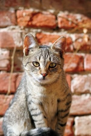 portrait of a cuus young kitten looking at the camera Stock Photo - 18081892