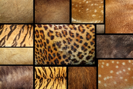 samling av naturliga texturer - djur lurviga skinn Stockfoto