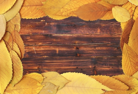 golden color faded cherry leaves forming a frame on a wooden background