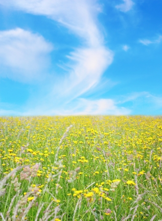 invaded: countryside landscape - green field invaded by wild flowers and blue beautiful sky with clouds