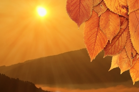 golden faded cherry leaves and a beautiful autumn sunrise over the hills
