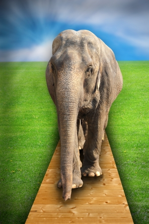 invade: concept with elephant walking on man made wooden structure as people invade animals teritorry Stock Photo