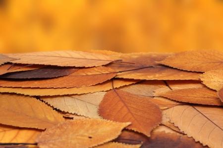 bladeren: stelletje verouderde Cherry bladeren op de grond