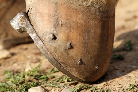 close up of horseshoe mounted on the hoof photo