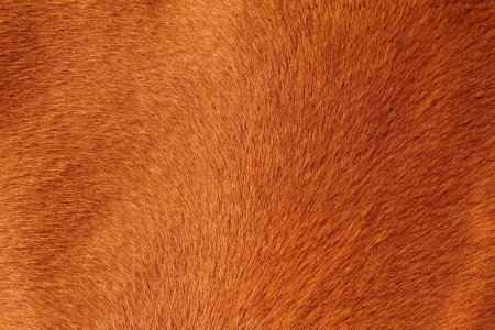 close up of textured pelt from a brown horse Banco de Imagens