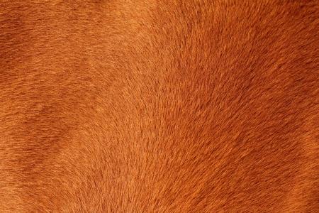 close up of textured pelt from a brown horse Standard-Bild