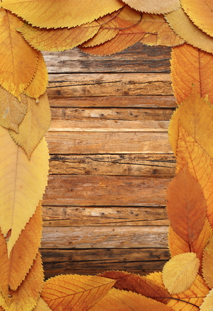 beautiful thanksgiving: beautiful thanksgiving backdrop made from faded autumn leaves on wood table Stock Photo