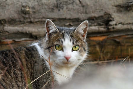 domestic mottled cat portrait curiously looking at the camera Stock Photo - 24154091
