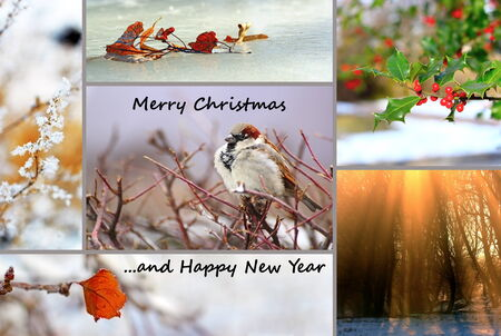 winter greeting card, collage with nature images for christmas and new year photo