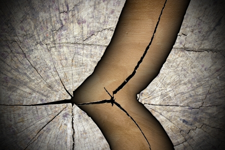 cracked tree stump abstract texture Standard-Bild
