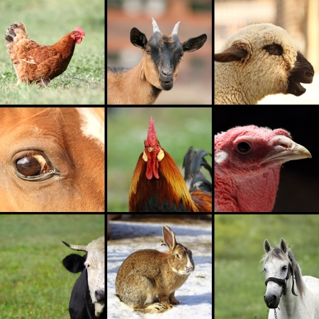 collection of images with animals from the farm photo