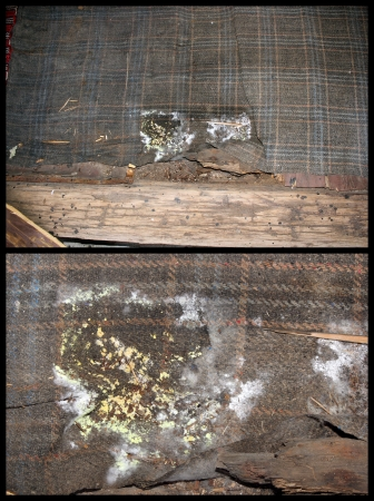 Detail of wood fungus from wooden floor extending on a carpet  The fungus is growing on damp environment, so the carpet is  helping in a bad way  photo