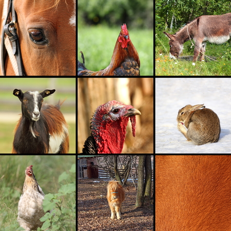 nine animals from the farm forming collection for design photo