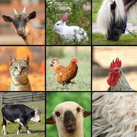 gran collage con animales de granja elaborado photo