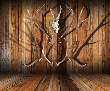 abstract view of hunting trophies on wooden finished room photo