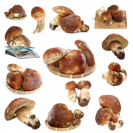 collection of fungi porcini ready for cooking isolated over white background photo