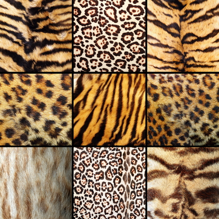 collection of wild cats fur, tigers, leopards and ocelot photo