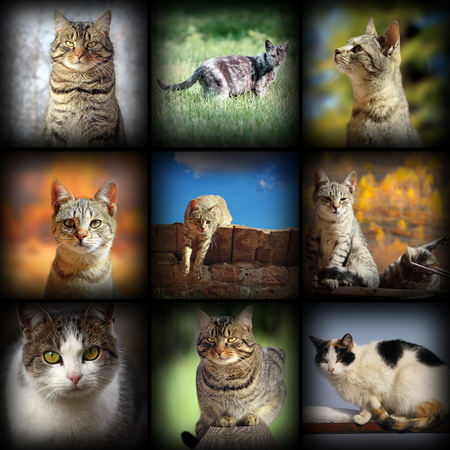 cats images collection, nine pictures of different pets with added vignette photo