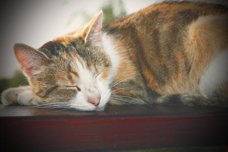 balustrade: lazy cat sleeping on wooden balustrade