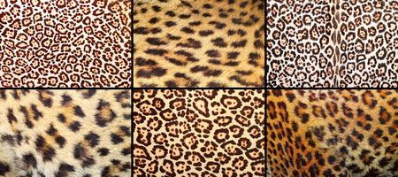 pelt: collection of leopard pelt textures, real fur