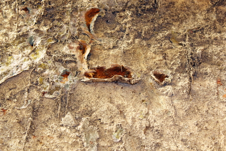 restauration: serpula lacrymans fungus, the dangerous dry rot growing on an old wall Stock Photo