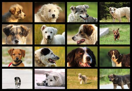 feral: images with romanian dogs from sheep farms, this are feral animals living near the wilderness Stock Photo
