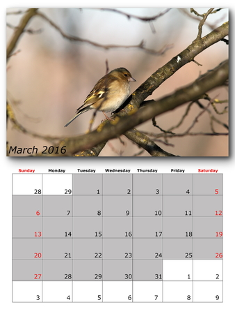 kalendarz: ptaki ogrodowe kalendarza marca 2016 r, układ