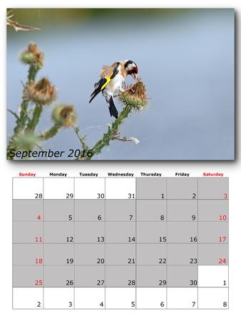 calendar september: garden birds calendar  september 2016, layout Stock Photo
