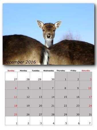 calendario diciembre: la vida silvestre de diciembre del calendario diseño de página de impresión 2016