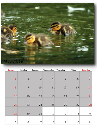 for print: may nature calendar page layout for print
