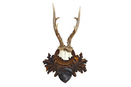 capreolus: roebuck hunting trophy isolated over white background ( Capreolus )