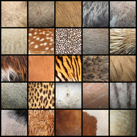 large collection of animal fur textures ready for your design Standard-Bild