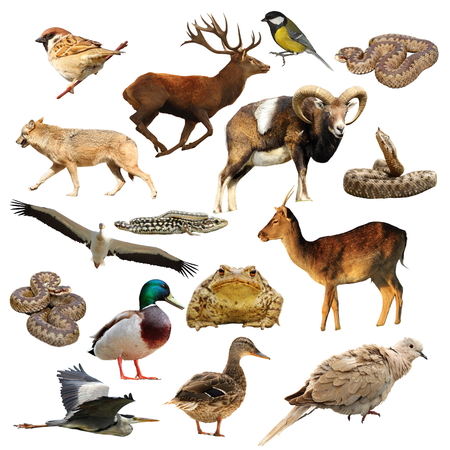 wildlife collection, full length animals isolated over white background ready for your design