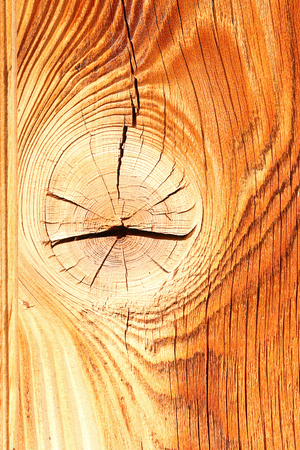 colorful spruce wood texture with knot, ready for your design